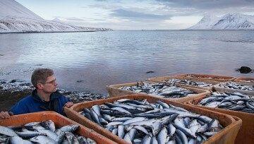 Льгота по налогу на имущество рыбохозяйственным организациям Приморья